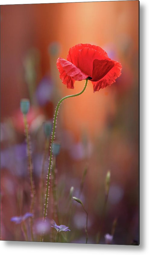 Flower Metal Print featuring the photograph At The End Of The Day. by Steve Moore