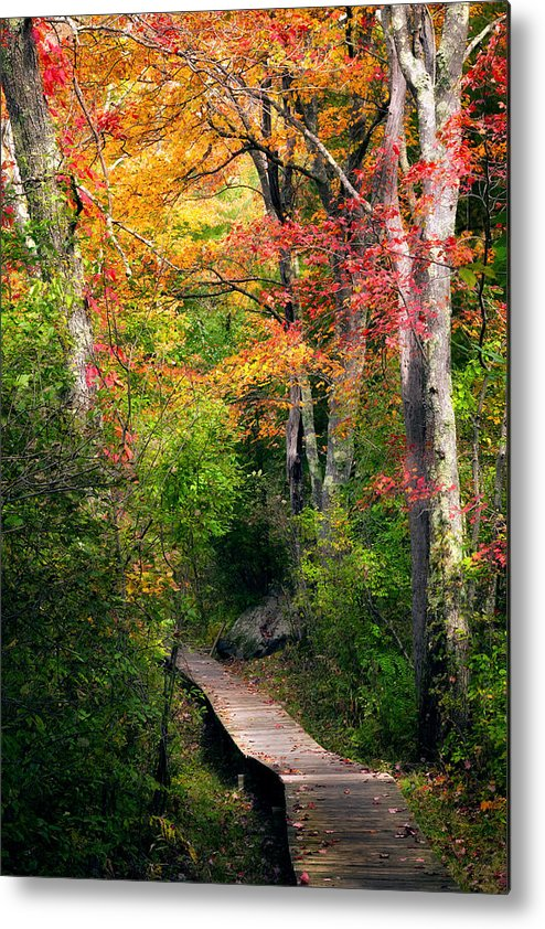 Autumn Metal Print featuring the photograph Autumn Boardwalk by Bill Wakeley