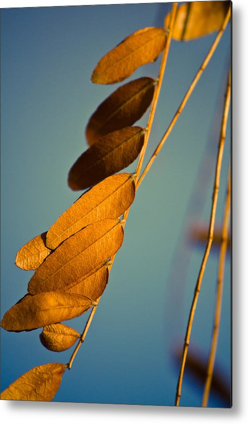 Leaves Metal Print featuring the photograph Autumn Feathers by Dave Garner