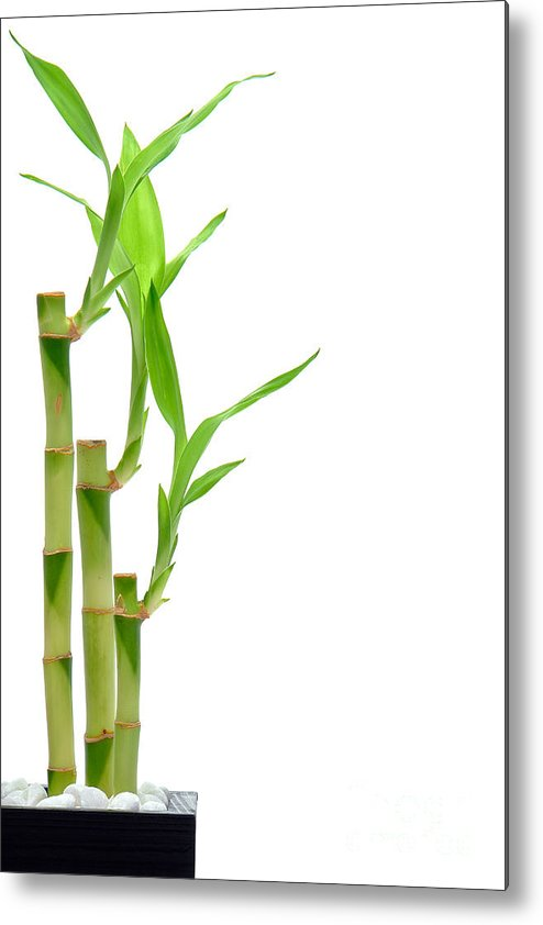 Bamboo Metal Print featuring the photograph Bamboo Stems In Black Vase by Olivier Le Queinec