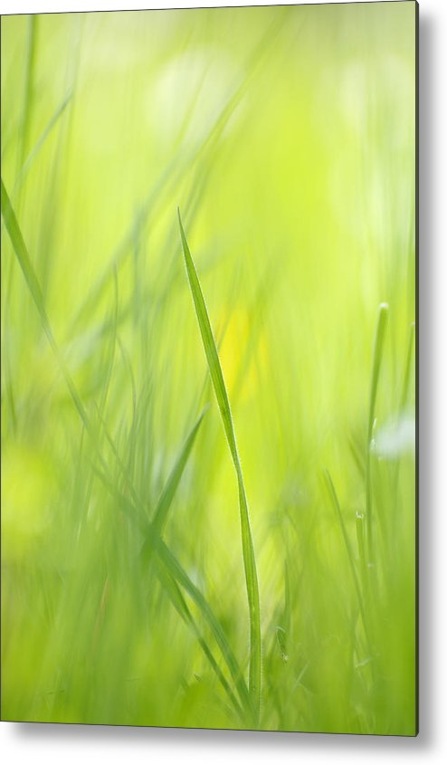 Spring Metal Print featuring the photograph Blades Of Grass - Green Spring Meadow - Abstract Soft Blurred by Matthias Hauser