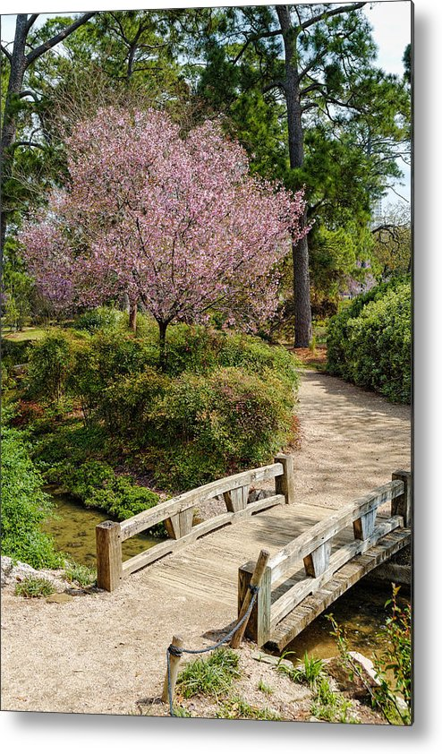 Houston Metal Print Featuring The Photograph Blossoming Cherry Tree At Houston  Japanese Garden   Hermann Park