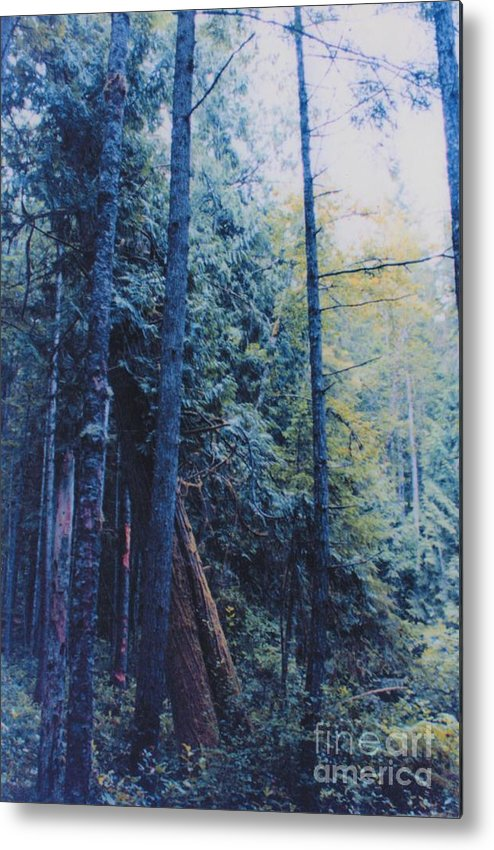 First Star Metal Print featuring the photograph Blue Forest By Jrr by First Star Art