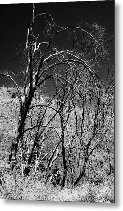 Cleveland National Forest Metal Print featuring the photograph Branching Out by Philip Chiu