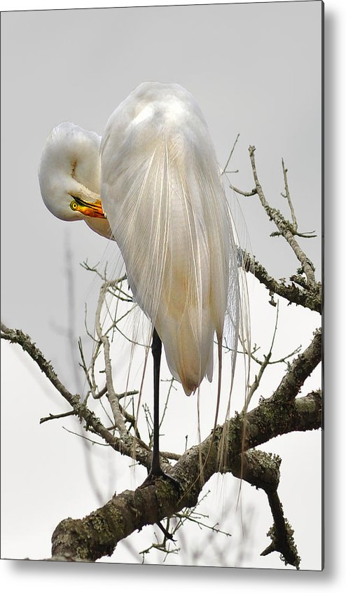 Metal Print featuring the photograph Bride Of Magnolia by Donnie Smith