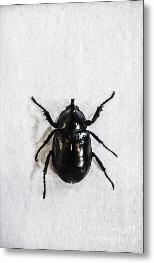 Bug Metal Print featuring the photograph Bug by Margie Hurwich