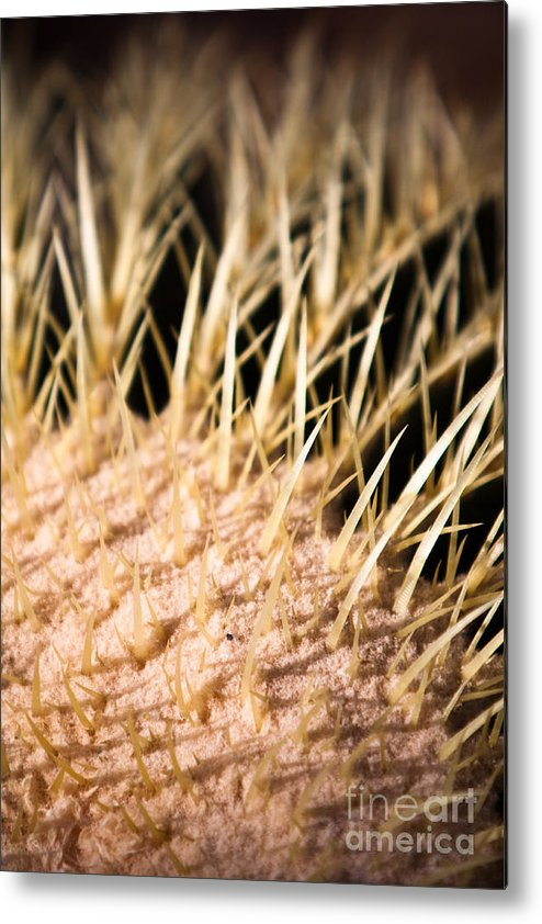 Botanical Metal Print featuring the photograph Cactus Skin by John Wadleigh