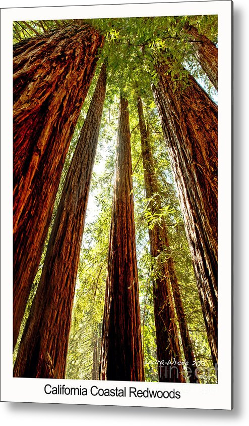 Redwoods Metal Print featuring the photograph California Coastal Redwoods by Artist and Photographer Laura Wrede