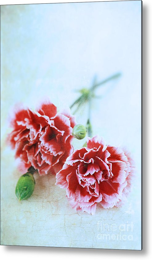 Colour Metal Print featuring the photograph Carnations by Stephanie Frey