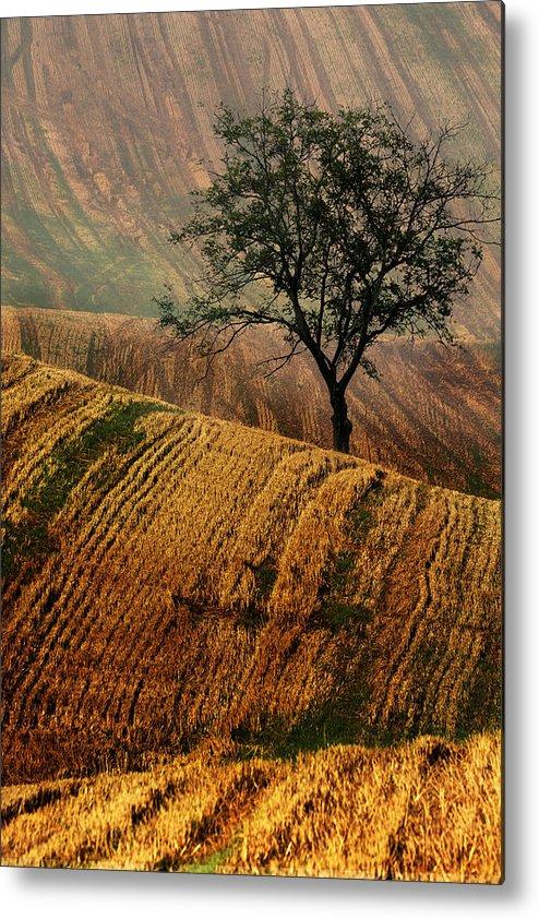 Landscape Metal Print featuring the photograph Carpet Fields Of Moravia by Jaroslaw Blaminsky
