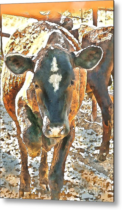 Cow Art Metal Print featuring the photograph Cattle Round Up by Artist and Photographer Laura Wrede