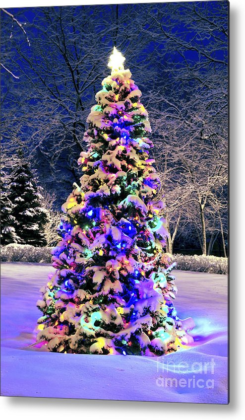 Christmas Metal Print featuring the photograph Christmas Tree In Snow by Elena Elisseeva