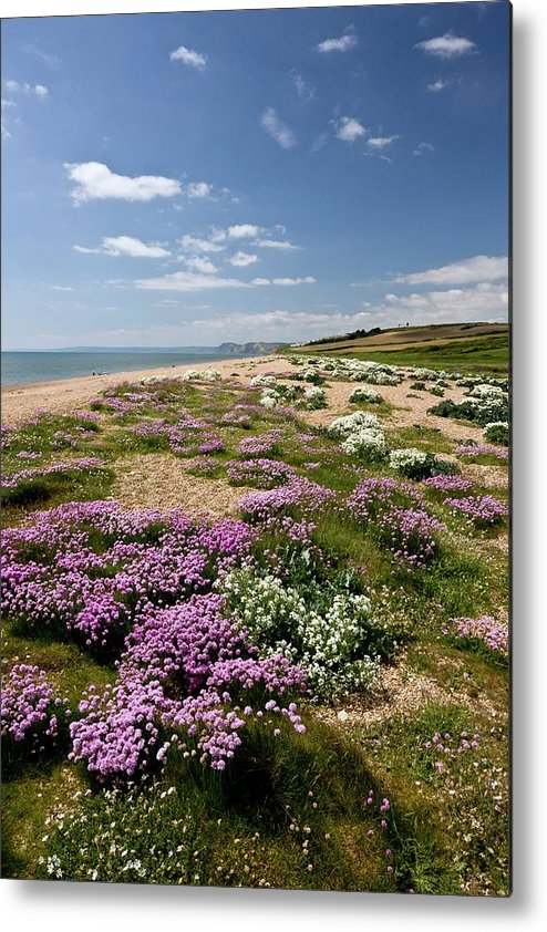 Britain Metal Print featuring the photograph Cogden Beach by Bob Gibbons