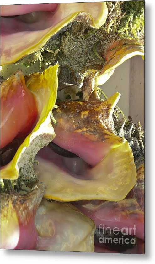 Vacation Metal Print featuring the photograph Conch Shells by Leslie Reitman
