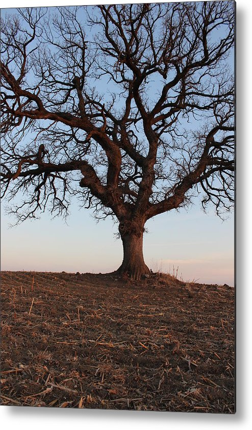 Tree Metal Print featuring the photograph Cryptic Tree by Kellan Ehrich