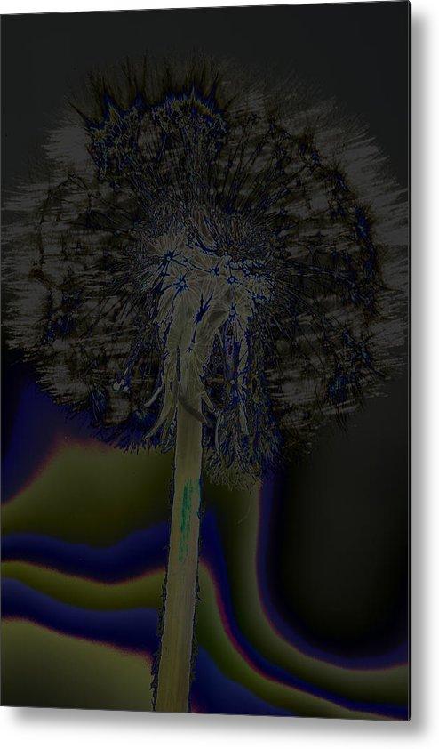 Flower Metal Print featuring the photograph Dandelion by Patrick Kessler