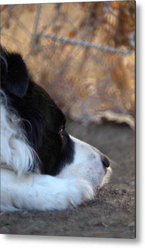 Dogs Metal Print featuring the digital art Dog Days by Aliceann Carlton