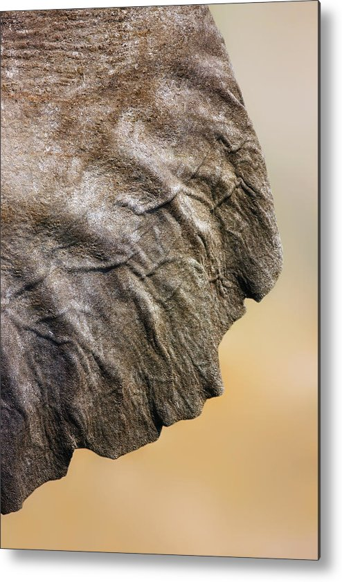 Texture Metal Print featuring the photograph Elephant Ear Close-up by Johan Swanepoel