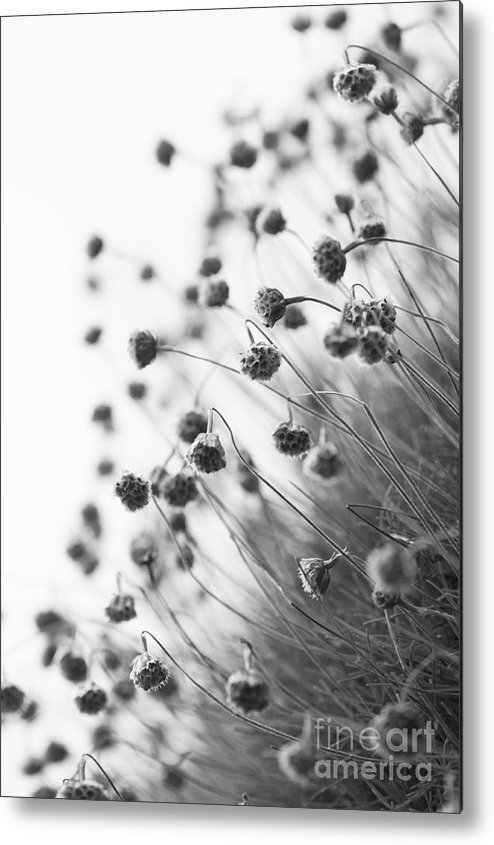 Abstract Metal Print featuring the photograph Fading Thrift by Anne Gilbert