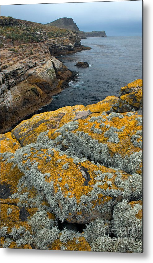 Lichen Metal Print featuring the photograph Falkland Islands by John Shaw