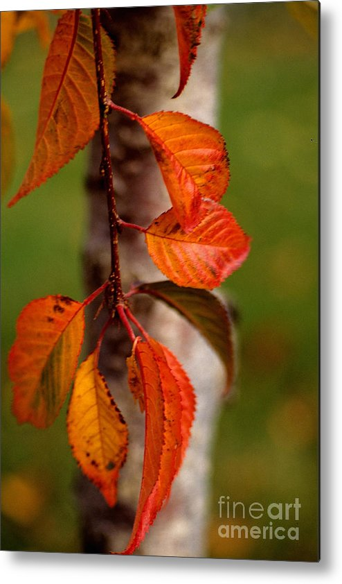 Fall Metal Print featuring the photograph Fall Beauty by Sharon Elliott