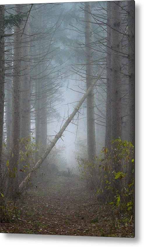 Landscape Metal Print featuring the photograph Falling Tree by Diane Carlson