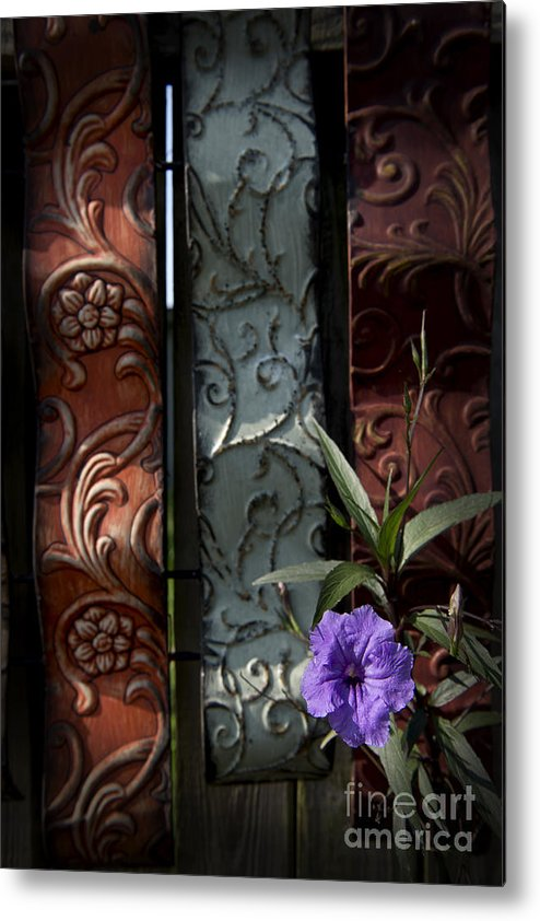 Wildflowers Metal Print featuring the photograph Fence Petunia by Roy Thoman