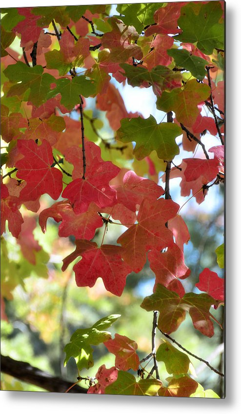 Fall Foliage Metal Print featuring the photograph First Signs Of Fall by Saija Lehtonen