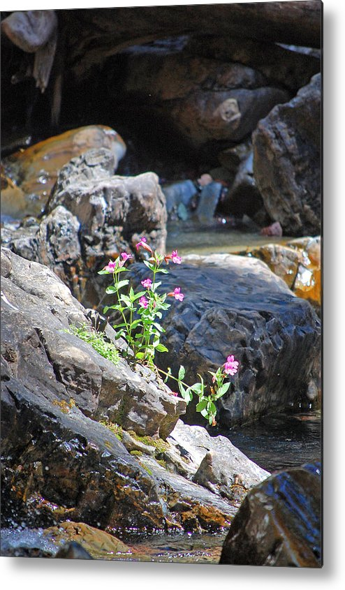 Morrell Falls Metal Print featuring the photograph Flowers On The Rock by Christina Jo Horton