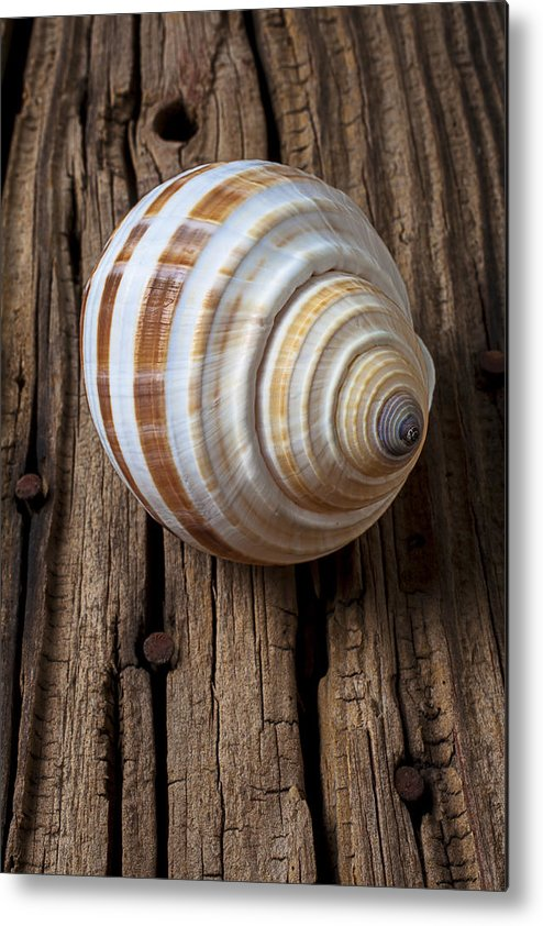 Sea Shell Metal Print featuring the photograph Found Sea Shell by Garry Gay