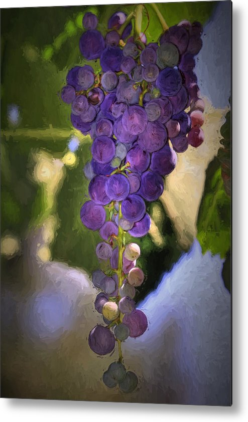 Grape Metal Print featuring the photograph Fruit Of The Vine by Donna Kennedy