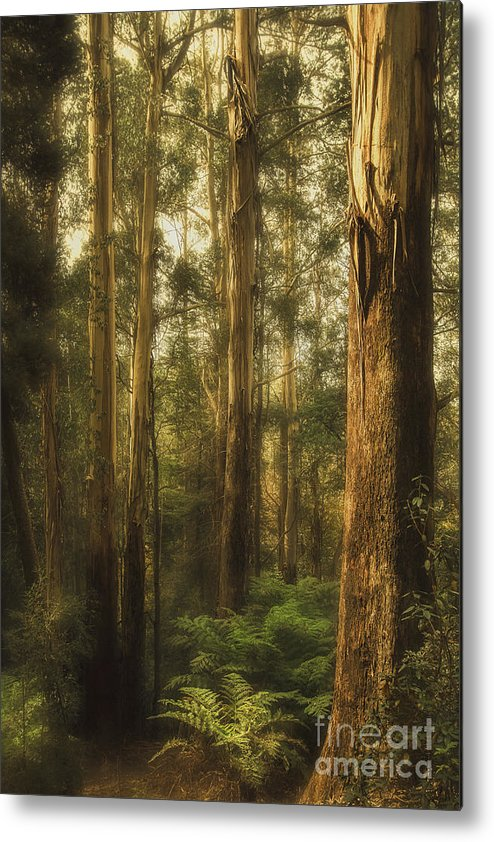Gum Metal Print featuring the photograph Ghostly by Andrew Paranavitana