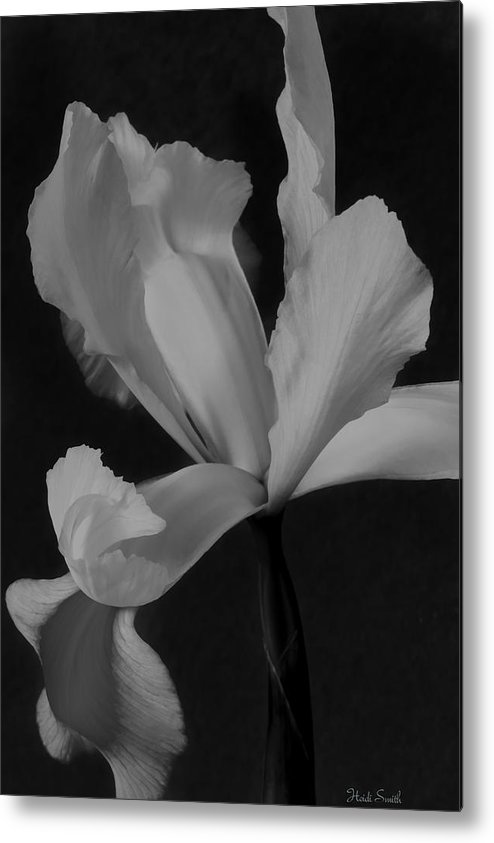 Monochrome Metal Print featuring the photograph Graceful In Monochrome by Heidi Smith
