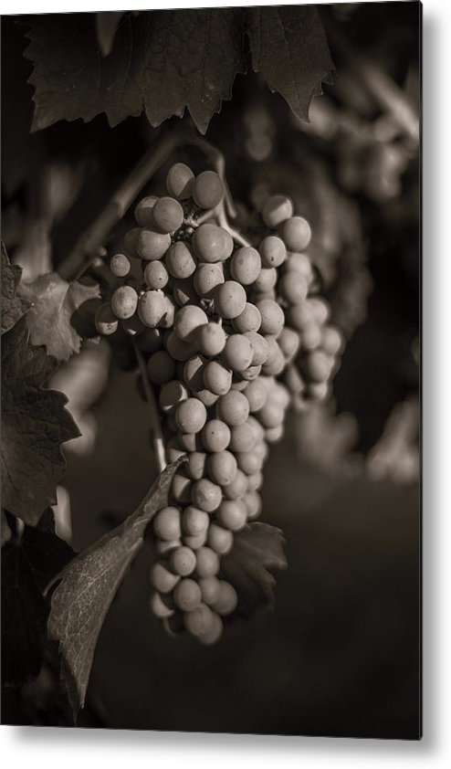 Fine Art Metal Print featuring the photograph Grapes In Grey 2 by Clint Brewer