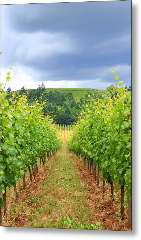 Wineries Metal Print featuring the photograph Grapes Of Wrath by Debra Kaye McKrill