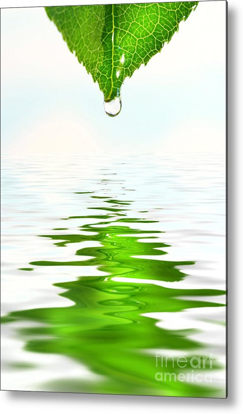 Background Metal Print featuring the photograph Green Leaf Over Water Reflection by Sandra Cunningham