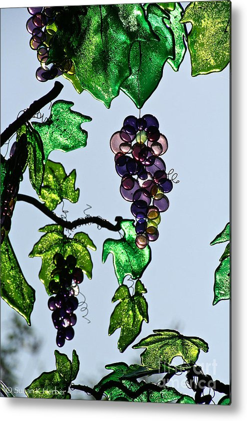 Outdoor Metal Print featuring the photograph Growing Glass Grapes by Susan Herber