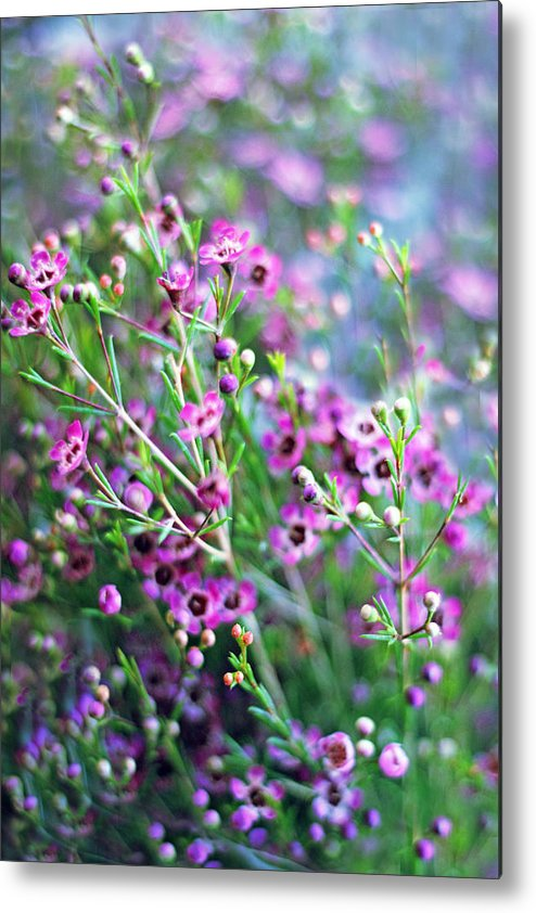 Spring Metal Print featuring the photograph Heather by Jessica Jenney