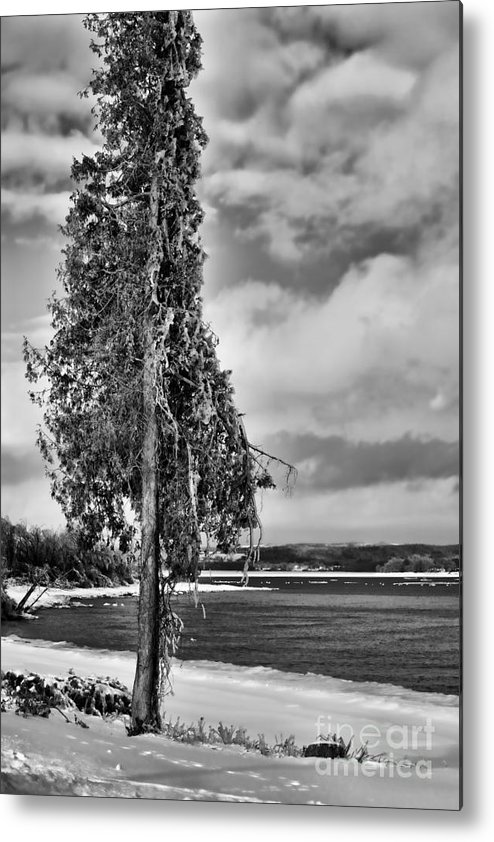 Ice Metal Print featuring the photograph Ice Coated Tree by Louise Heusinkveld