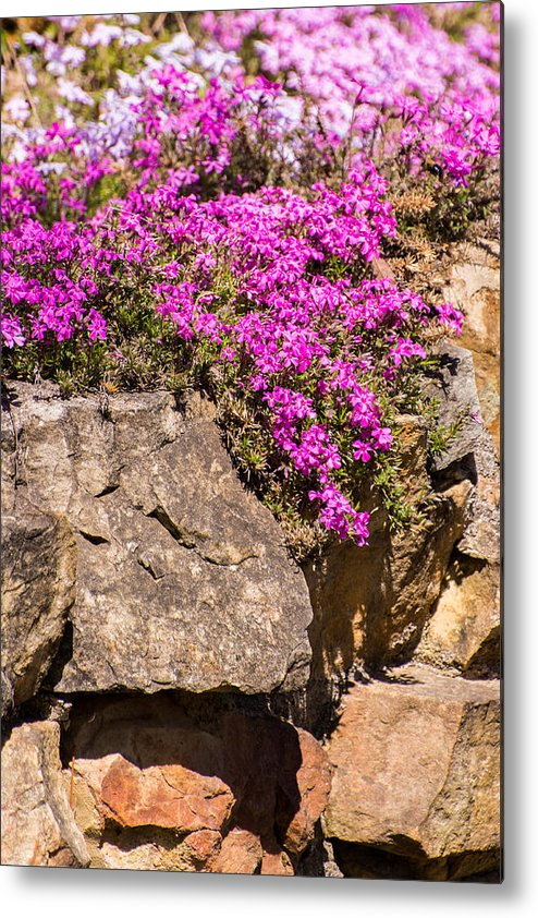 Blossom Metal Print featuring the photograph I'll Have Mine On The Rocks by John Carroll