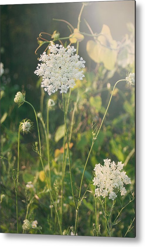 Queen Anne's Lace Metal Print featuring the photograph It Was A Summer Of Love by Laurie Search
