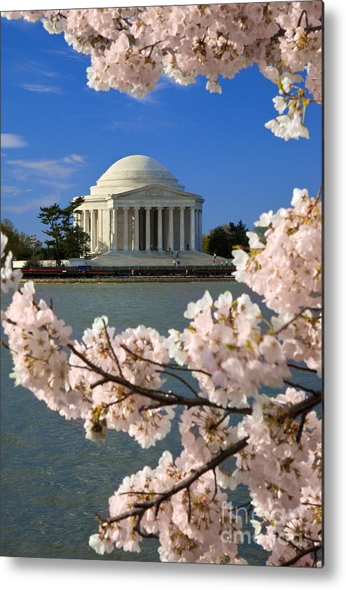 Thomas Jefferson Metal Print featuring the photograph Jefferson Memorial Cherry Trees by Brian Jannsen