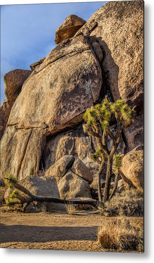 Joshua Tree National Park Metal Print featuring the photograph Joshua Tree 11 by Diana Powell