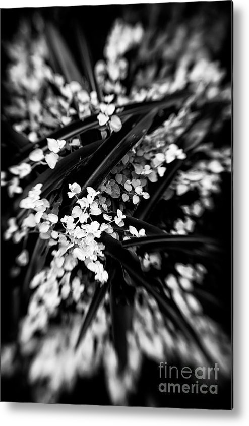 Botanical Metal Print featuring the photograph Lances In The Leaves by Venetta Archer