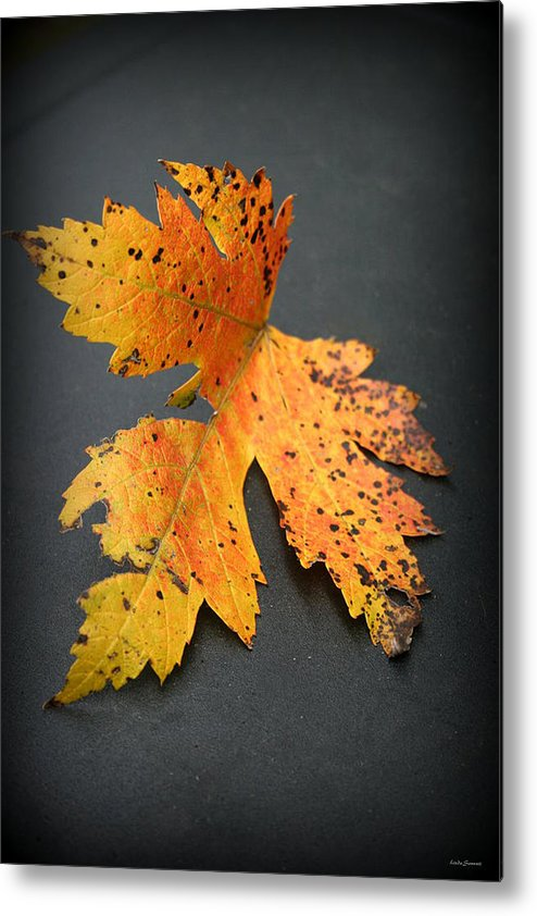 Nature Metal Print featuring the photograph Leaf Portrait by Linda Sannuti