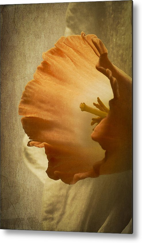 Flower Metal Print featuring the photograph Light From Within by Wayne Meyer