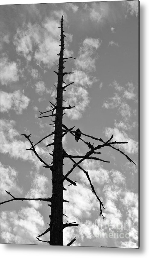 Metal Print featuring the photograph Lonely Vulture by Sharron Cuthbertson