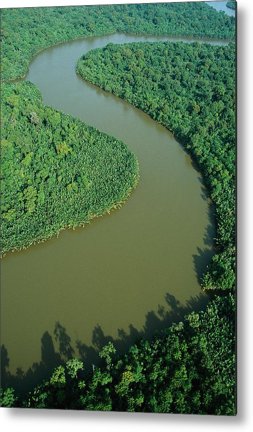 Jh Metal Print featuring the photograph Mangrove Rhizophora Sp In Mahakam Delta by Cyril Ruoso
