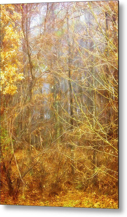 Misty Morning Metal Print featuring the photograph Landscape - Morning Walk In The Woods - 2 by Barry Jones