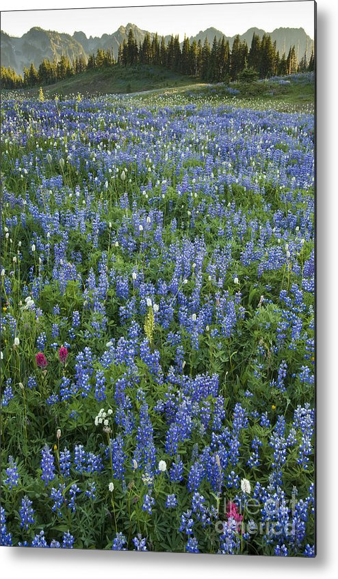 Alpine Metal Print featuring the photograph Mountain Flower Meadow by John Shaw